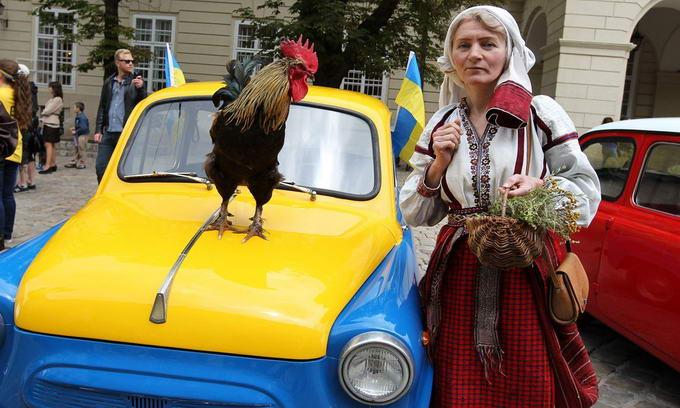 Львівський півень також спрогнозував перемогу України над Францією