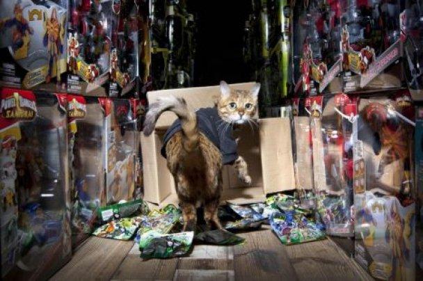 Кішку найняли охоронцем на склад іграшок