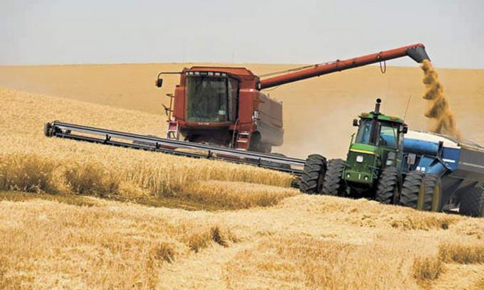 Врожай зернових на Волині збитковим не буде