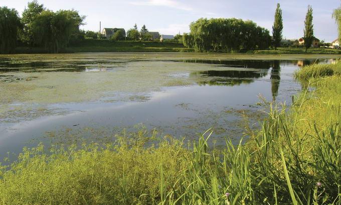 Ставків-озер багато — купатися ніде