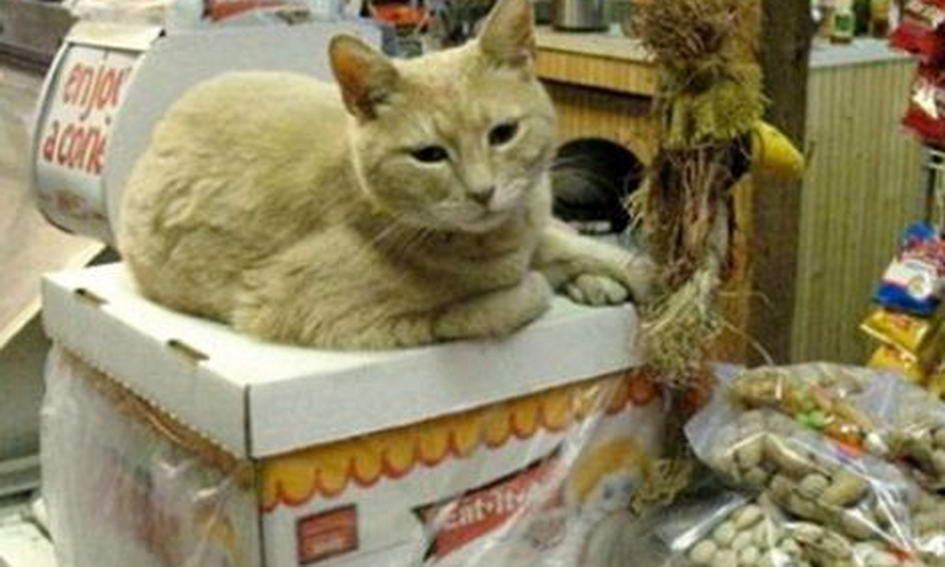 У містечку на Алясці 15 років мером обирають кота