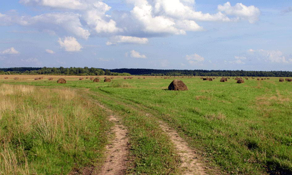 Фермер самовільно зайняв 280 гектарів земель запасу