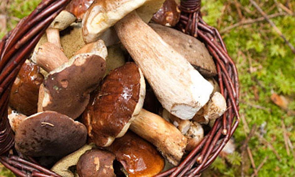 Заготівельники ягід і грибів поповнили обласний бюджет на 8,4 мільйона