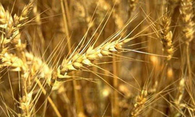 Україна та Росія спільними зусиллями просуватимуть зерно на світовий ринок