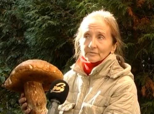 Лучанка знайшла гриб-рекордсмен у 1,5 кілограма