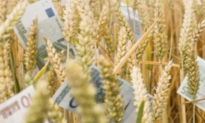 Через місяць Україна припинить експорт пшениці