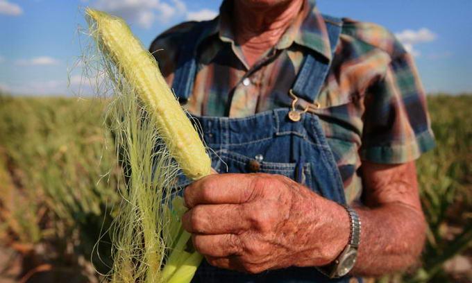 У 2013 році фермери посадять на 20% овочів менше
