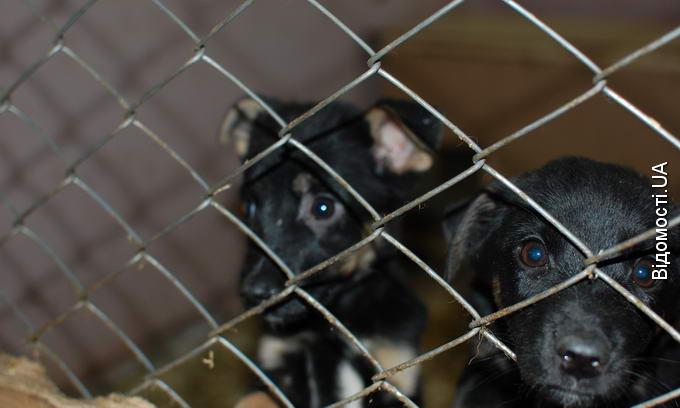У Луцьку буде новий притулок для бездомних собак