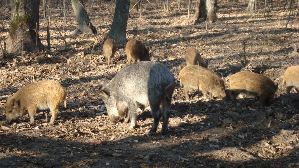 Понад 2 тисячі гектарів мисливських угідь депутати передали громадській організації