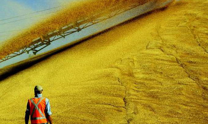 Українським зерном можна забезпечити 200 мільйонів людей на планеті