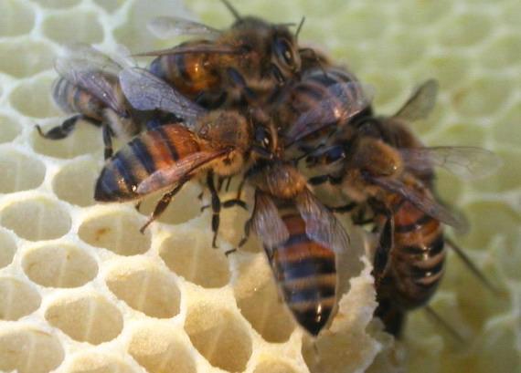 Волинським бджолярам заборгували обіцяні програмою кошти