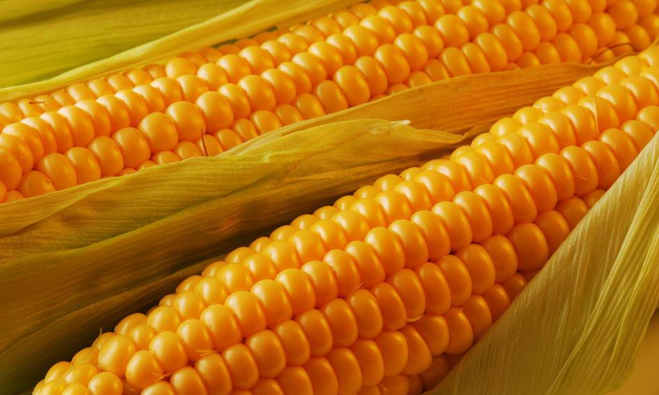Україна спродує за кордон кукурудзу минулого врожаю