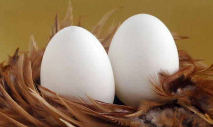 Найбільший в Україні яєчний холдинг збільшив виробництво продукції