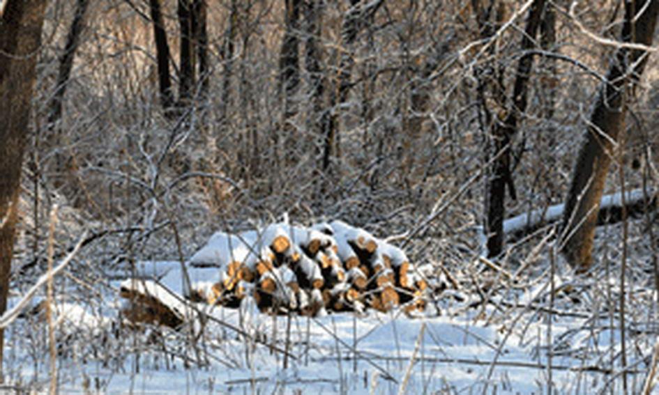 У Камінь-Каширському районі незаконно зрубали дуби