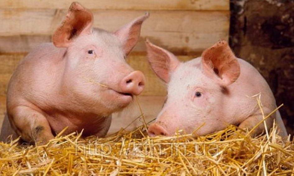 Україна запланувала скоротити імпорт свинини майже вдвічі