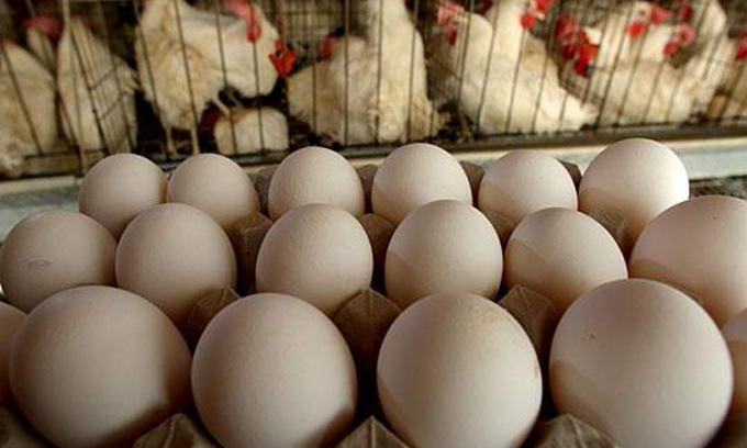 Українські яйця та курятина потрапили на ринок ЄС