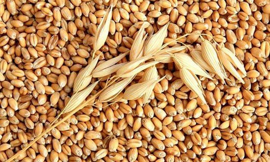 З початку року волинські аграрії експортували понад 56 тисяч тонн зерна