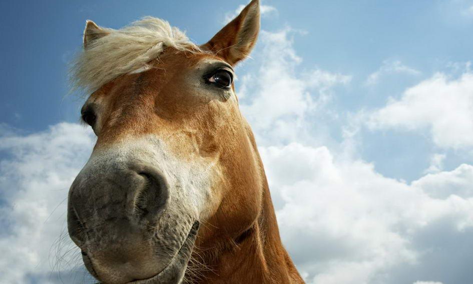 Троє селян вночі вели у Білорусь коней