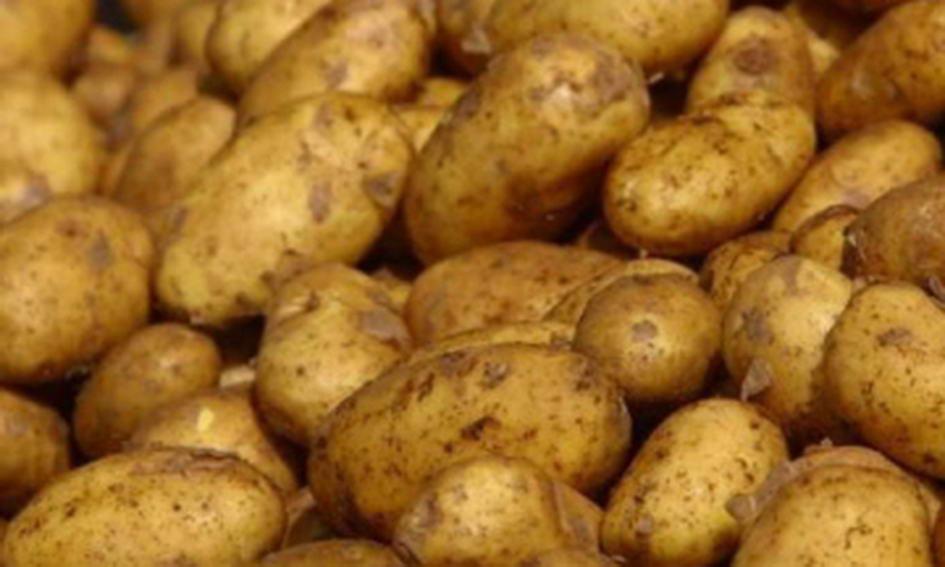 Заготівельник-шахрай не заплатив за 30 тонн картоплі
