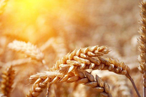 ЄБРР долучив Україну до «Зернової двадцятки»