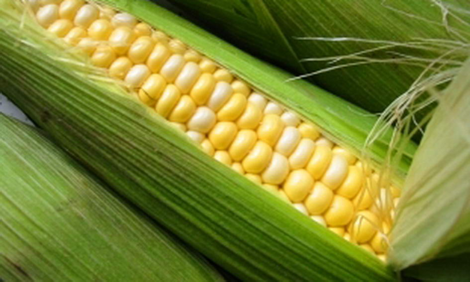 Цьогоріч Україна збуде за кордон 14 мільйонів тонн кукурудзи