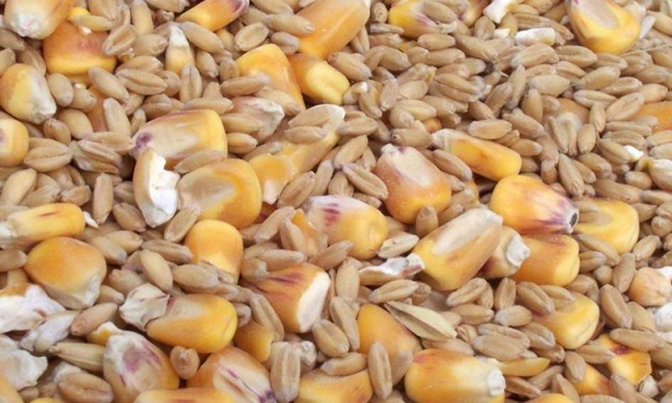 Аграріям платитимуть більше за зерно, закуплене за форвардними контрактами