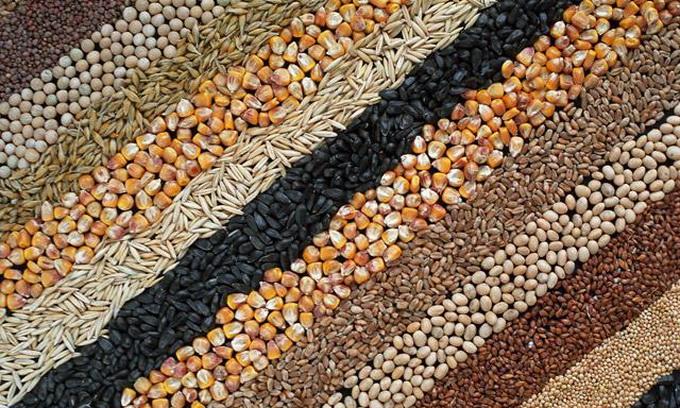 В Україні зростають інвестиції у виробництво високоякісного насіння