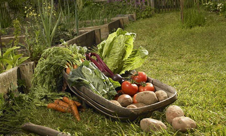 Держава економічно стимулюватиме виробництво органічної продукції