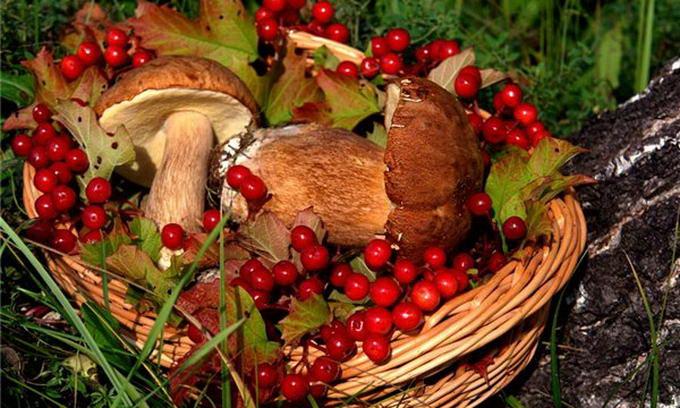 Ягідно-грибний сезон обіцяє волинянам 100 мільйонів гривень доходів