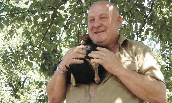 У волинському селі кури несуть бірюзові яйця