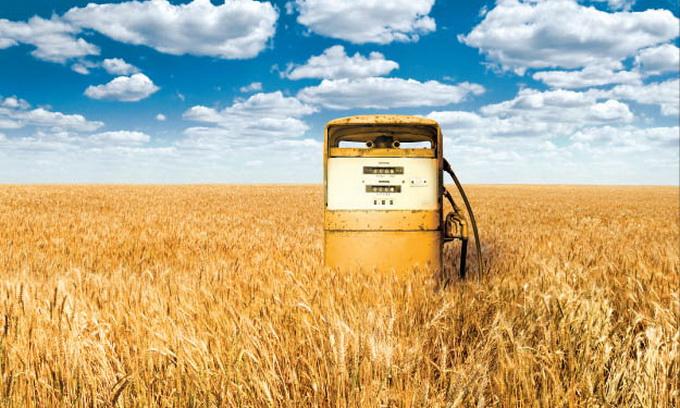 В Україні створять програму розвитку виробництва біопалива