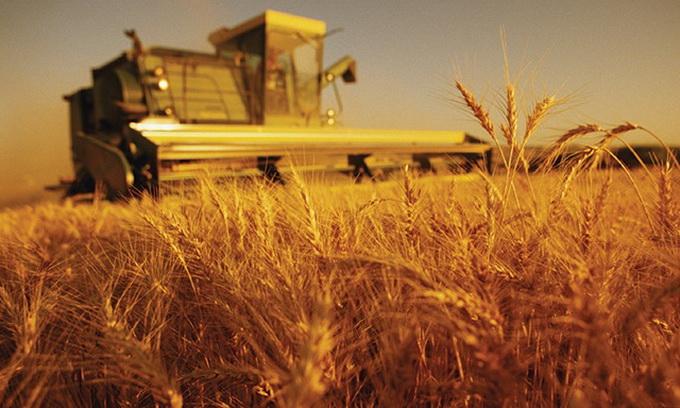 Аграрії уже намолотили 28 мільйонів тонн зерна