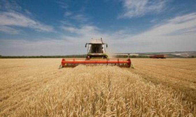 Волинські аграрії зібрали айже 700 тисяч тонн зерна