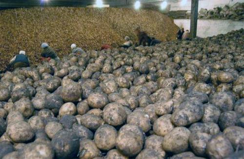 Щороку майже третина овочів в Україні псується через нестачу овочесховищ