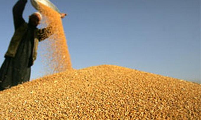 Близько 3,5 млн тонн українського зерна пішло на експорт