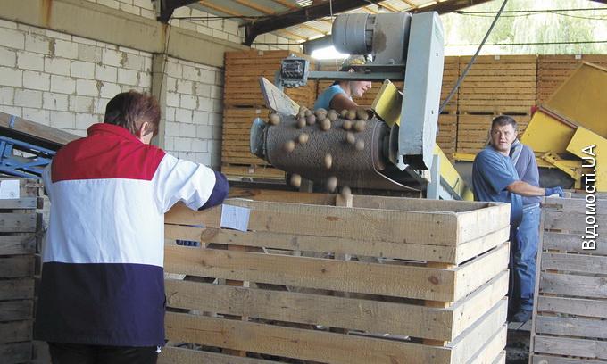 У Торчині зведуть завод із переробки картоплі