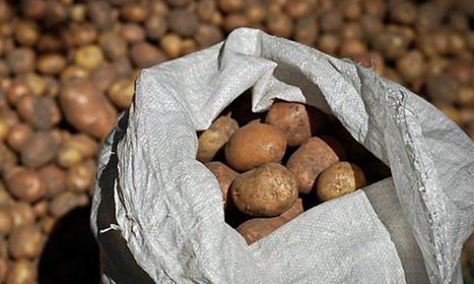 Фахівці кажуть, що картопля у жовтні може подешевшати
