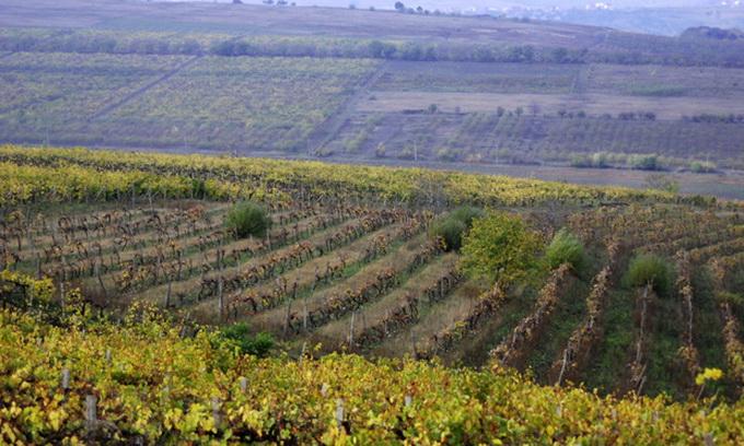 Румунія наростить обсяг імпорту молдавських вин, щоб підтримати сусідів