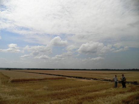 Дощі можуть завадити Україні зібрати рекордний врожай