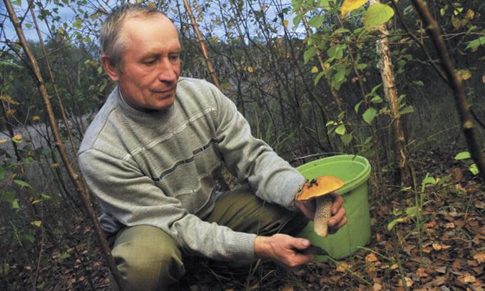 Для мешканців Полісся грибний сезон — можливість поповнити сімейний бюджет
