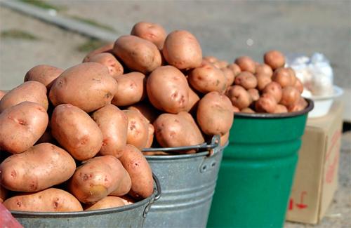 Присяжнюк запевняє, що картопля в Україні коштує 3,4 грн. за кілограм