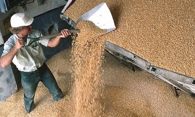 Україна нарощує темпи експорту зернових