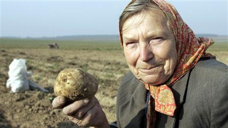Білорусам не вистачає картоплі