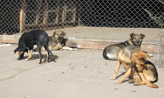 У Луцьку примусово реєструватимуть собак