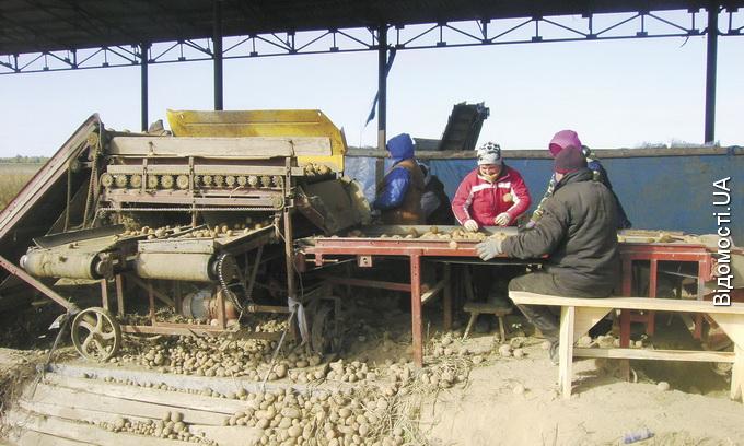 Колишній колгосп у Топільному не розвалився, і тепер селяни мають роботу