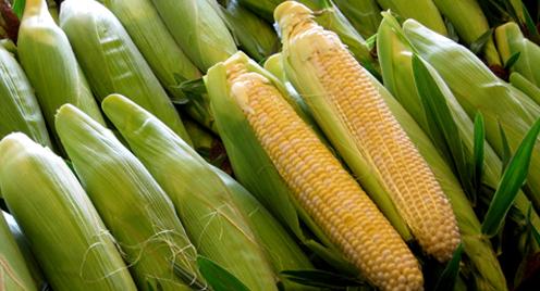 Через рекордний урожай в Україні суттєво подешевшала кукурудза