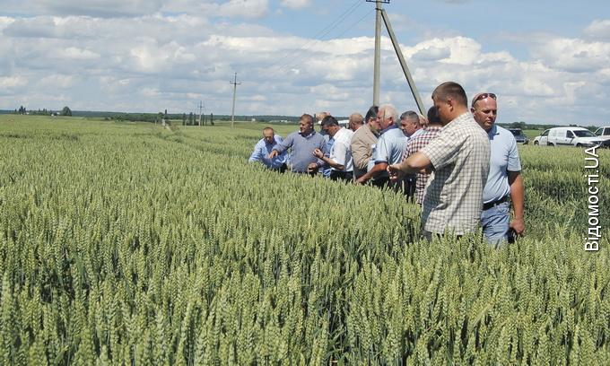 З волинських елеваторів зерно відвантажують у Європу