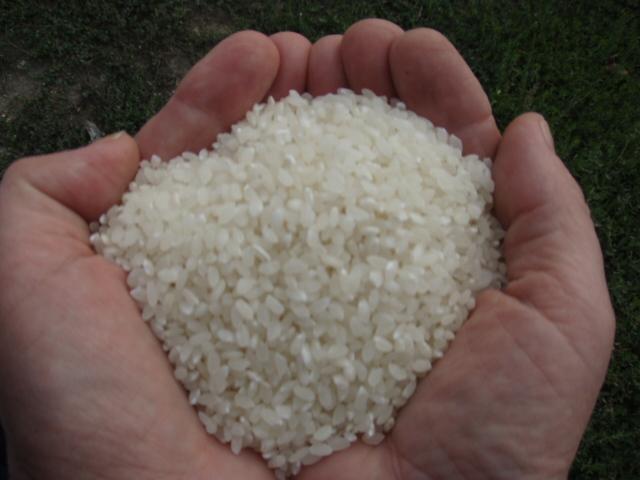 Крим ризикує залишитися без рису через дефіцит води