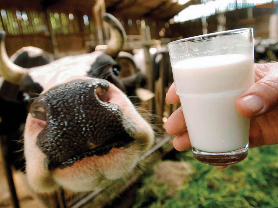 Українська молочна продукція навесні вийде на європейський ринок