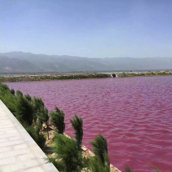 Мікроби в китайському озері роблять воду рожевою